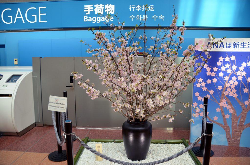 一足早く春を感じることができる紅吉野桜