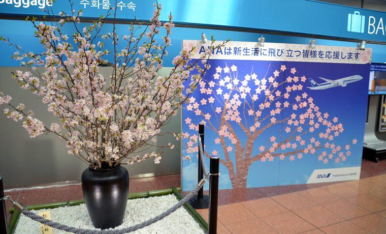 特設のメッセージボードと紅吉野桜